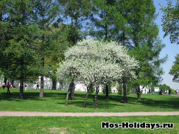 Фото Коломенское весной