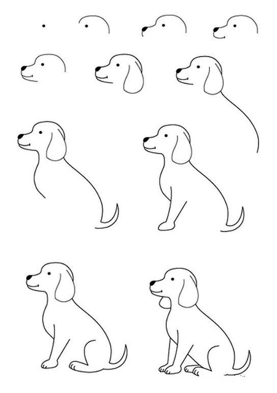 Как нарисовать поэтапно собаку карандашом