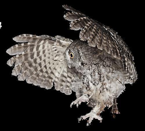 картинки сова на прозрачном фоне