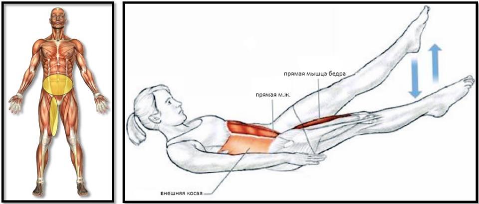 Упражнение ножницы мышцы атлас