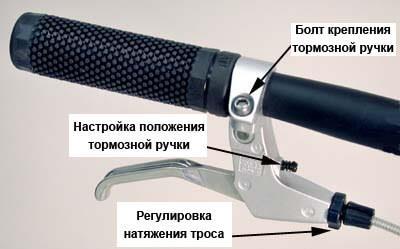 torzmoza