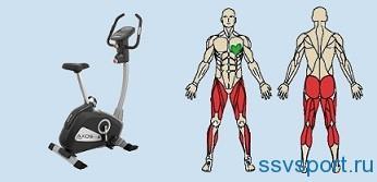 Велотренажер — какие мышцы работают