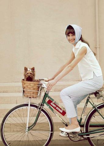 Корзина для велосипеда - отличное место для собачки!