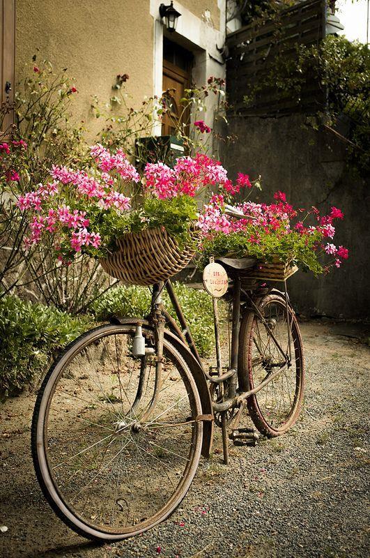 Цветы в старом велосипеде